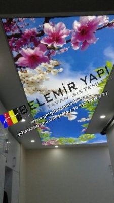 Sky, Tree, Bird, Flower, Butterfly, Pigeon, Eagle, Crow, Hawk Vs. We are ready to prepare all types of stretch ceilings in our workshop and we offer to our valued customers. You are the Hayel Edin Bizler Let's do it in the service. Sitrah Decoration